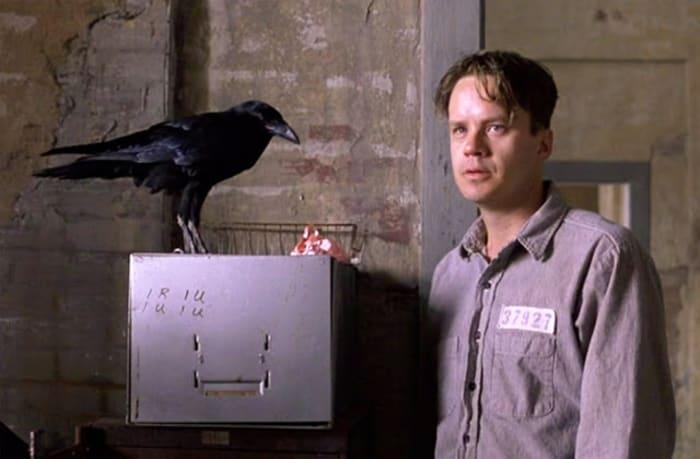 Shawshank Redemption crow
