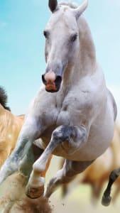 Fondo de pantalla con caballo