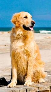 Fondo de pantalla con perro