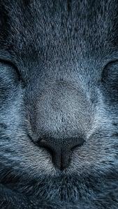 Fondo de pantalla con gato