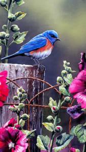 Fondo de pantalla con pájaro