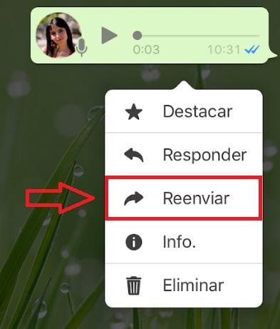 WhatsApp: Dónde se guardan los archivos de audio