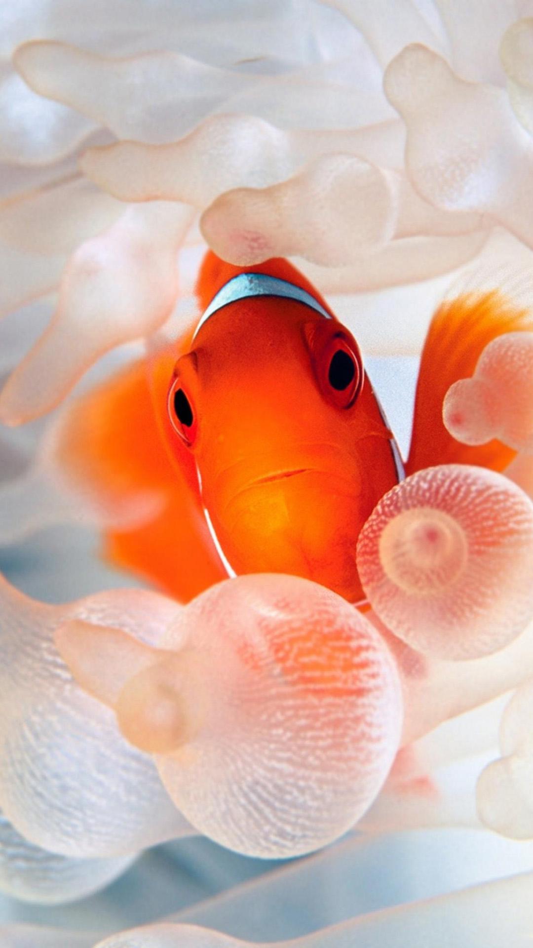 Fondo de pantalla pez