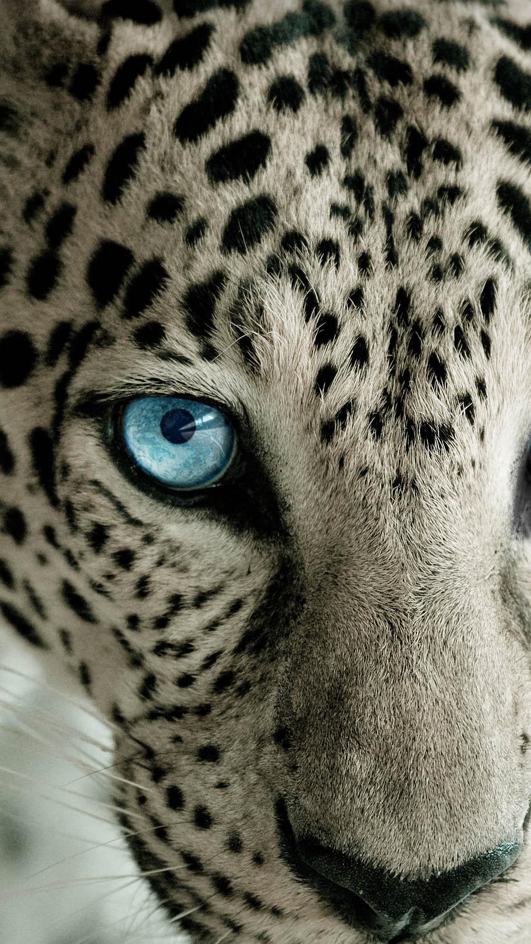 Fondo de pantalla leopardo
