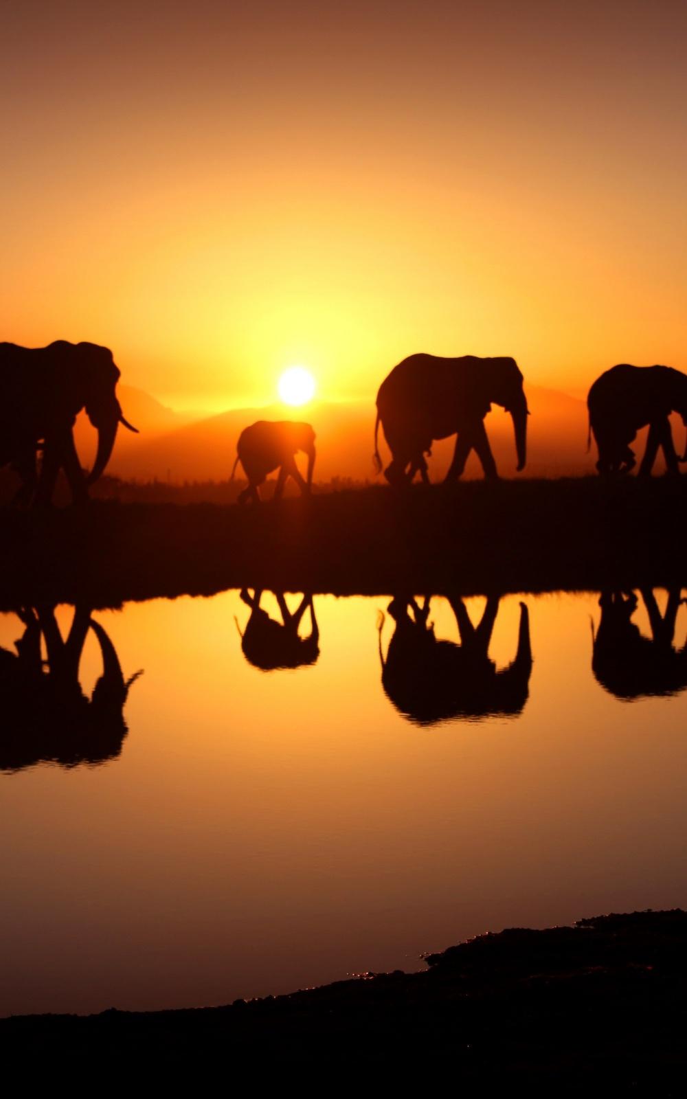 Fondo de pantalla elefantes