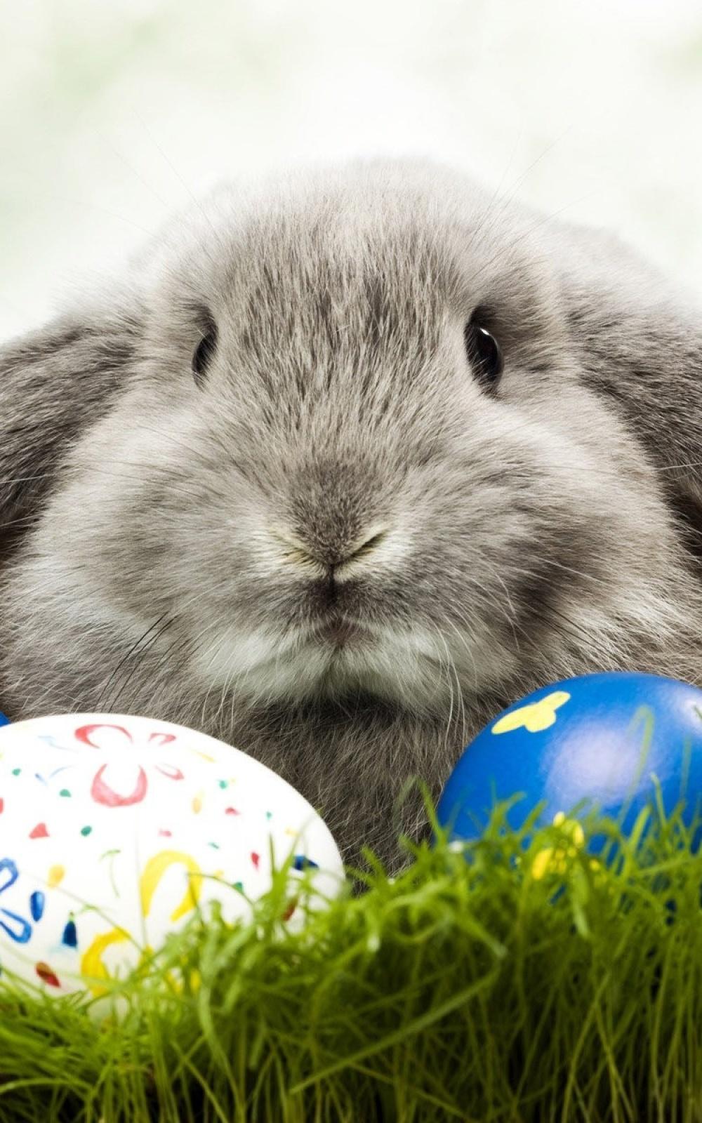 Fondo de pantalla conejo