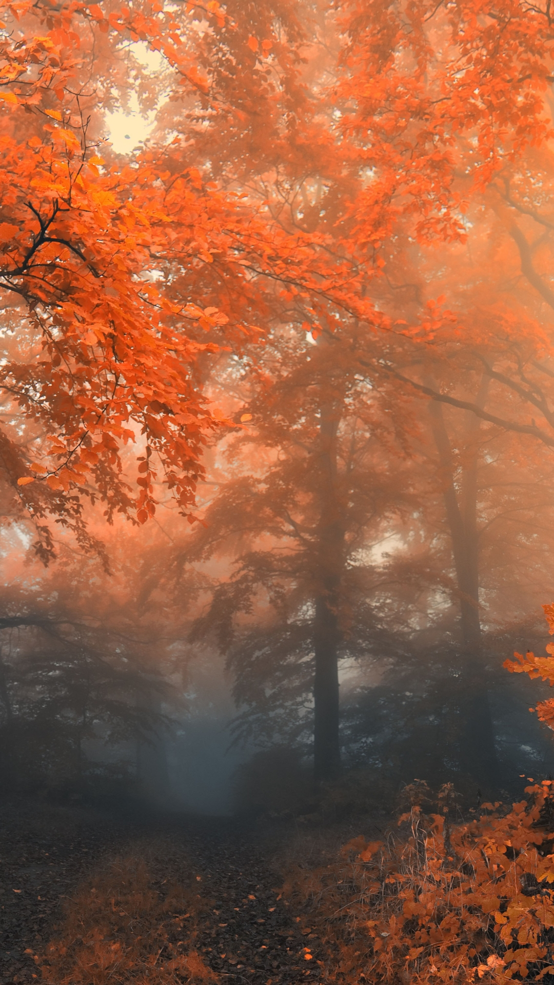 Fondo de pantalla de otoño