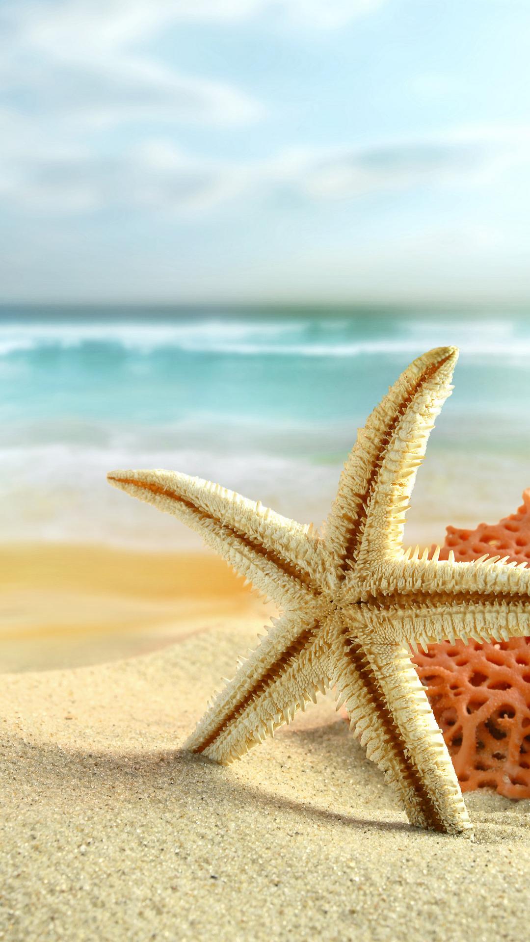 Fondo de pantalla con estrella de mar