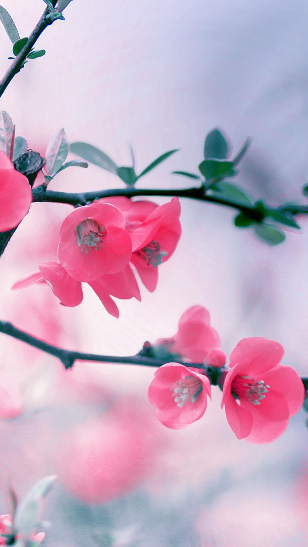 Fondo de pantalla con flores de cerezo