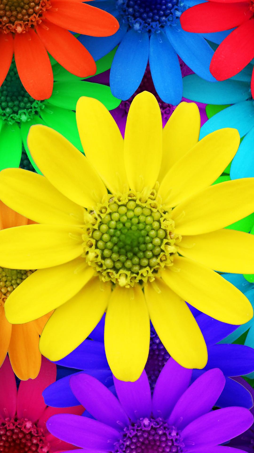 Fondo de pantalla con flores multicolores