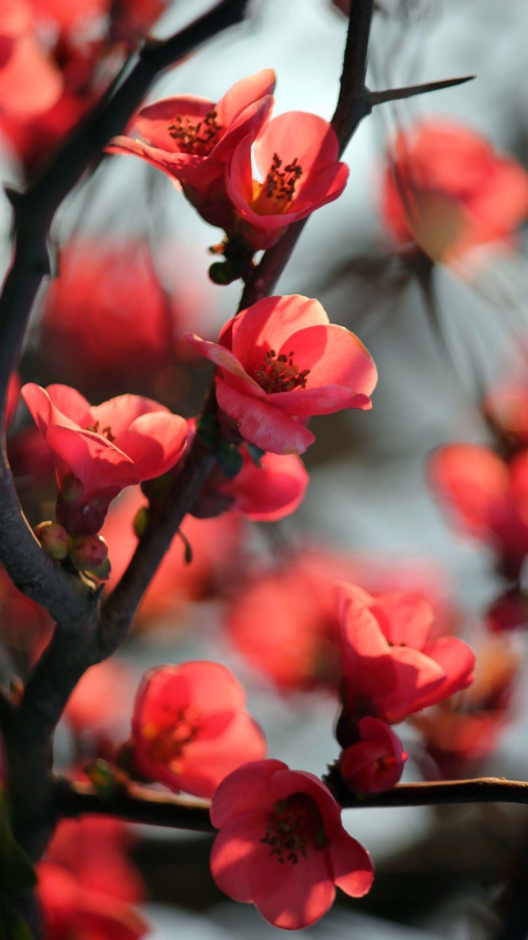 Fondo de pantalla con flores rojas