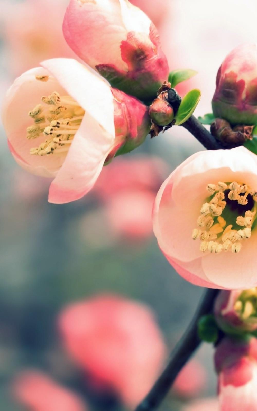Fondo de pantalla con flores rosa