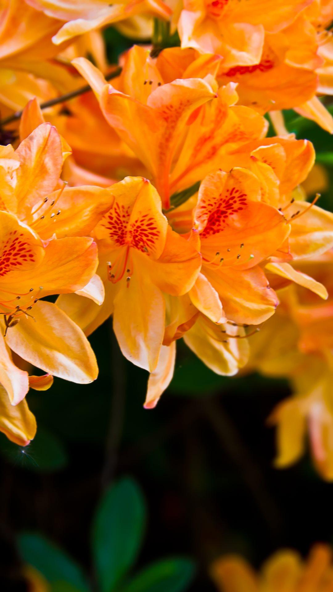Fondo de pantalla con flores naranjas