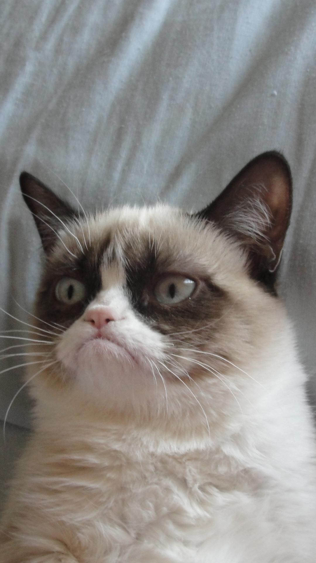 Fondo de pantalla con Grumpy Cat