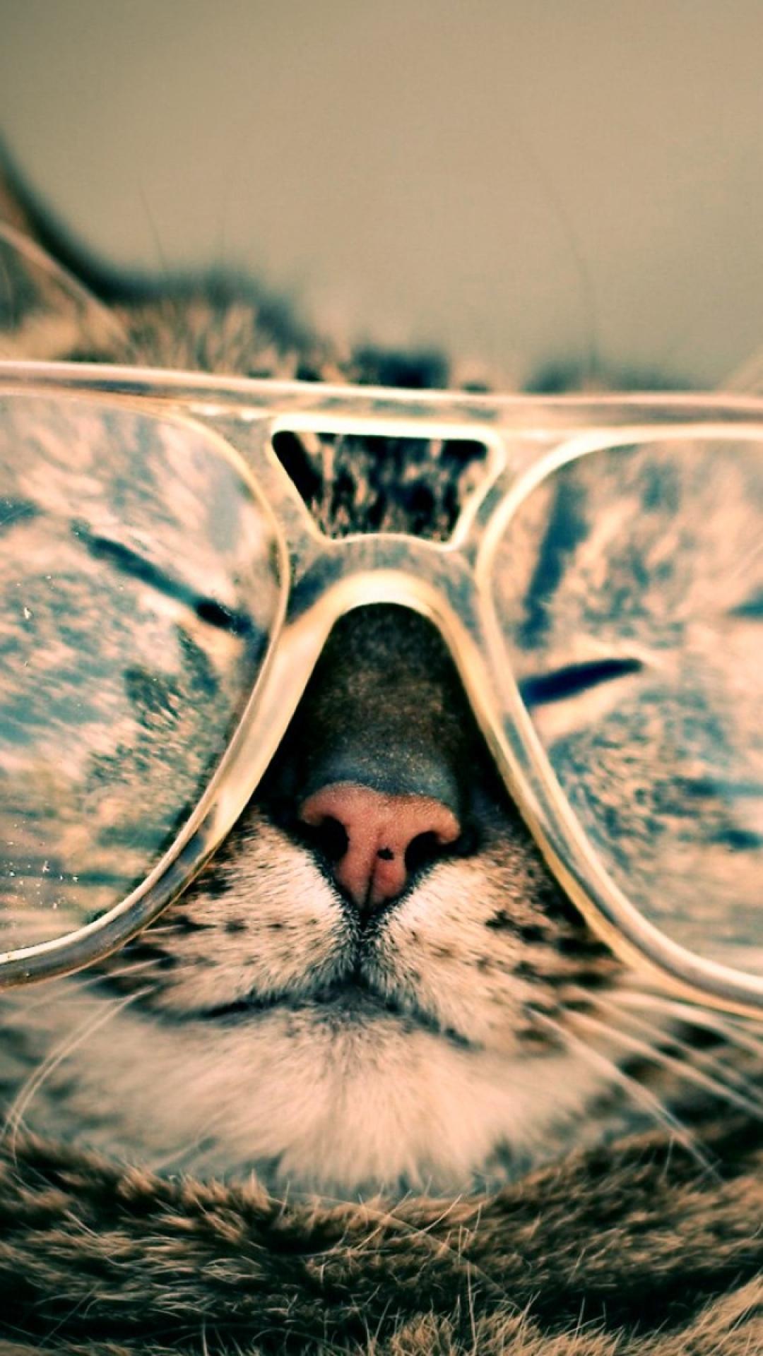Fondo de pantalla de gato con gafas