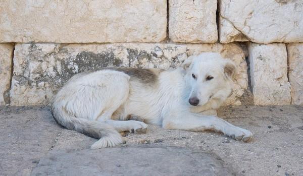 Perro tumbado en la calle