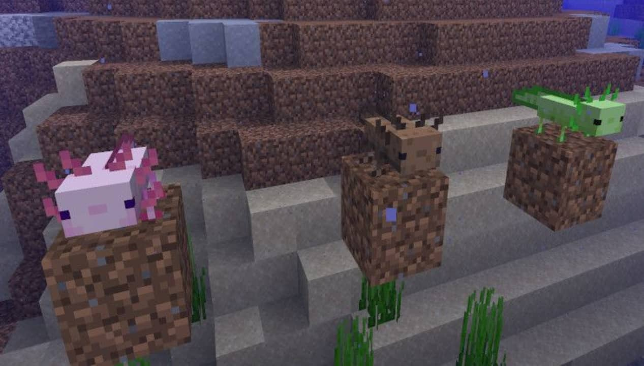 How to Get a Blue Axolotl in Minecraft